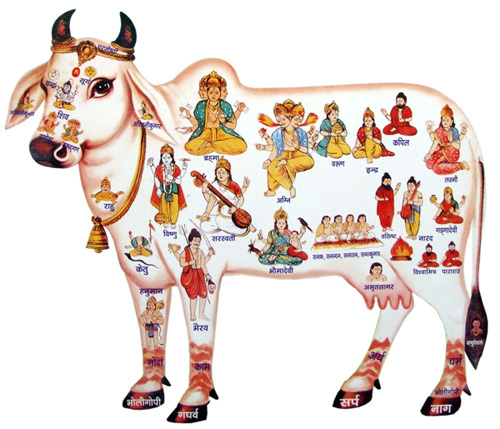 Cow showing the gods and goddesses